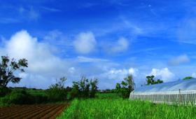 ソーラーシェアリングとは!?農地を活用して、新たな収益を産み出す方法
